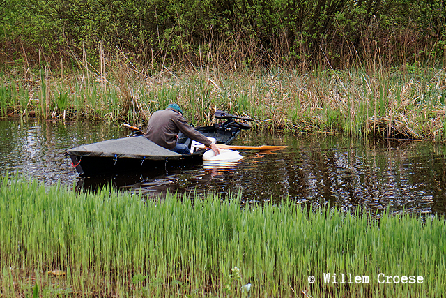 180424_640_©_Willem_Croese_Dode_knobbelzwaan
